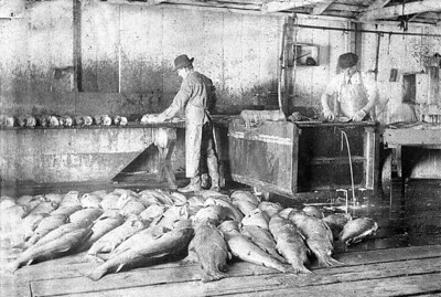 Commercial fishing in Nehalem Bay lasted until 1956.