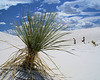 White Sands, NM