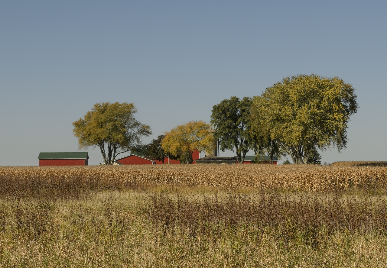 Wisconsin Savanah