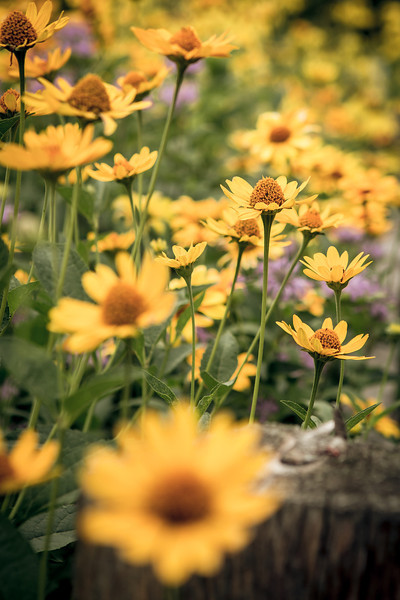 Prairie flower garden at Cave of the Mounds