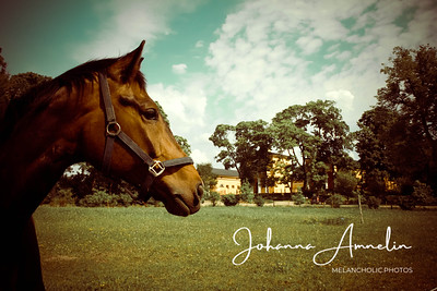 The horse of the mansion