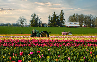 The Wooden Shoe Tulip Festival is a Tulip festival held in Woodburn, Oregon, United States. Ray Hull - Roseburg, Oregon Photographer