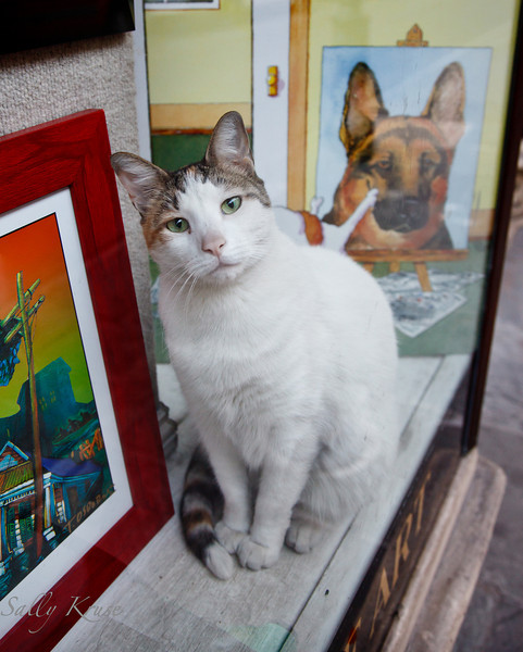 A cat in the window with dog art at a French Quarter art gallery.