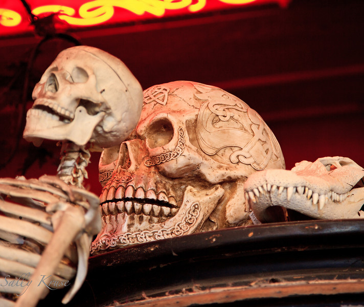 """A simple display of bones and skulls in a Decatur Street shop in New Orleans.  """"People are dying to shop here.""""  =]"""