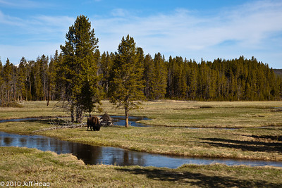 Near Gibbon River & Ice Lake, Yellowstone NP