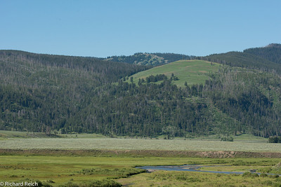 Lamar Valley Yellowstone National Park 7/8/13