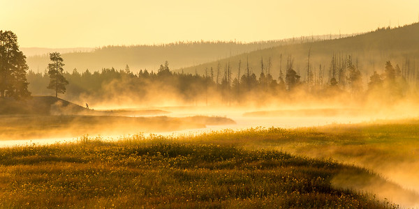 Misty Yellowstone Morning, 2014