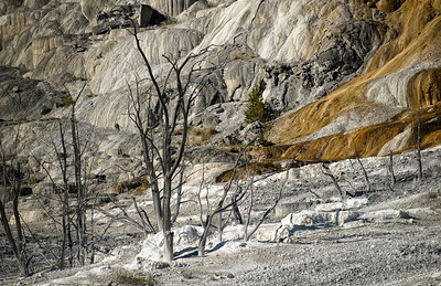 Lower Terrace - Mammoth Hot Springs