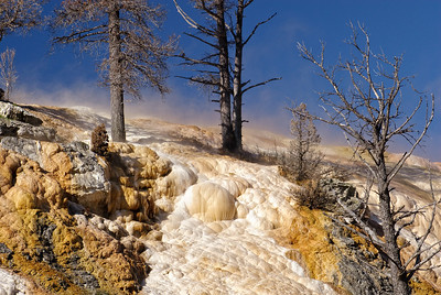 Morning on the Lower Terrace - Mammoth Hot Springs