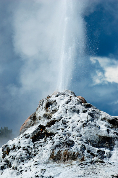 White Dome Geyser erupting at Yellowstone National Park, USA.