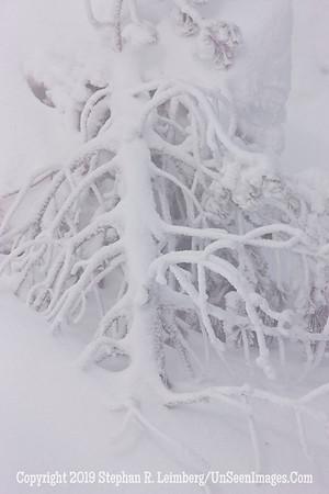 Frosted Tree _U0U0029 web