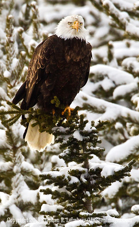 Eagle Snow Branch BL8I3823 web