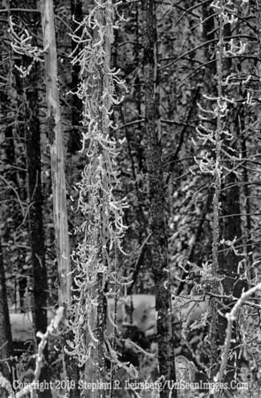 Woods _U0U0104 web