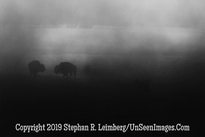 Bison in Mist B&W BL8I0929 web