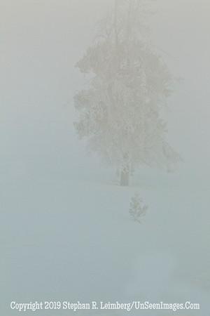 Ghost Tree BL8I0867 web