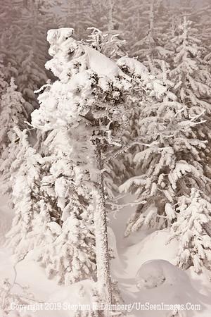 White Tree _U0U0048 web