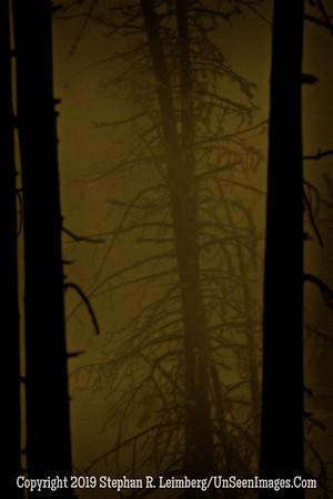 Tree Inside Trees 2 BL8I1341 x web