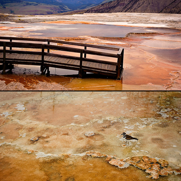 Mammoth Hot Springs Diptych<br /> <br /> Decks to nowhere, birds that won't scald