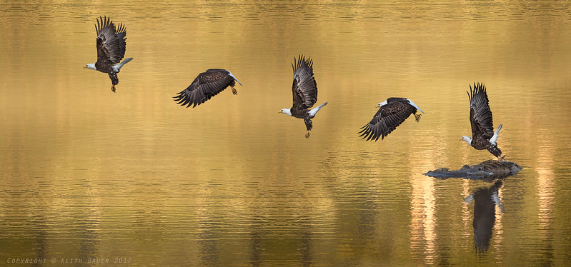 Digital composite of the eagle flight series