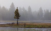 Gibbon Meadows in the Fog