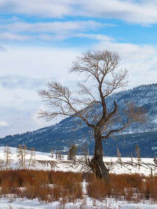 Yellowstone Winter-7
