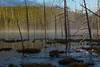 Mist on the pond