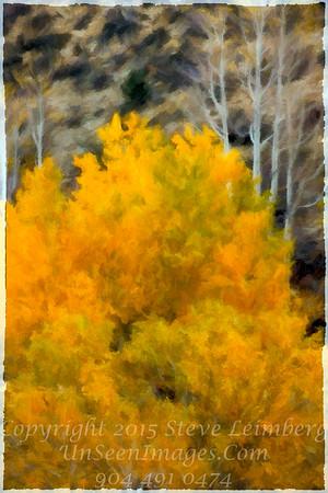 Golden Tree Yosemite - Copyright 2015 Steve Leimberg - UnSeenImages Com _Z2A7900