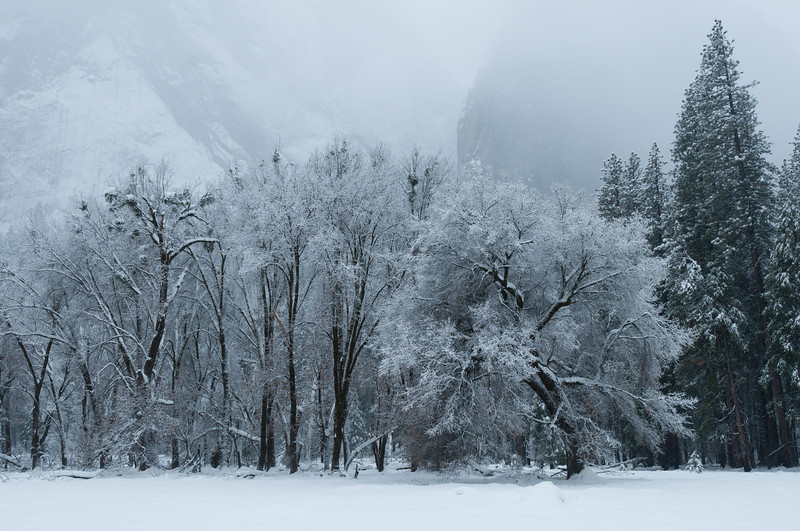 Cathedral Meadow<br /> Yosemite National Park