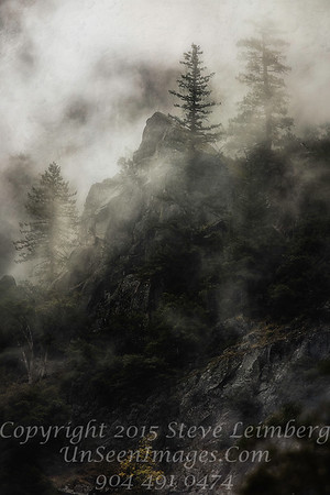 Trees Through the Mist - Copyright 2015 Steve Leimberg - UnSeenImages Com _Z2A7380