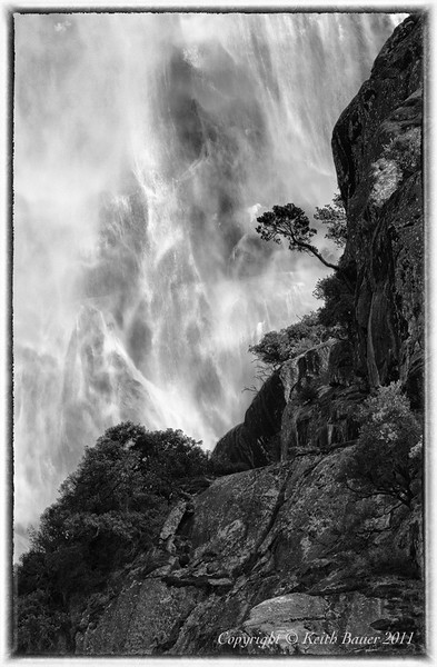 Tree on the Edge - Upper Yosemite Falls