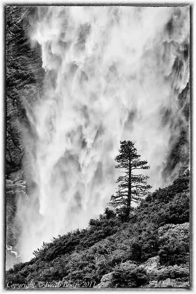 The Tree - Upper Yosemite Falls