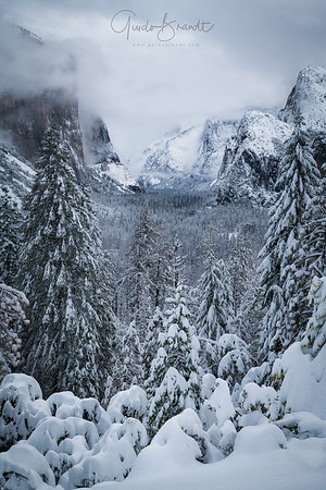 Trees, Snow and Mountains