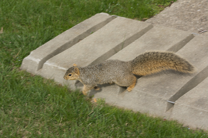 Airborn squirrel