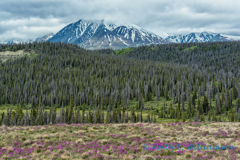 Near Haines Junction, Yukon