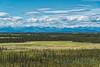 Meadow, Wrangell Mountains, Yukon