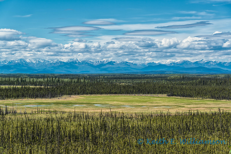 Meadow, Wrangell Mountains, Yukon