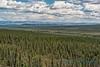 Taiga forest, Yukon