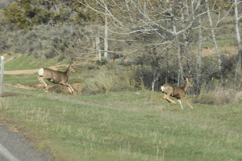 ...and the deer and the antelope play.
