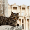 Cat like a serious guard of the ancient ruins of Ephesus.