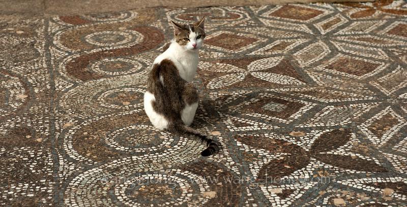 Cat on beautiful masaic floor at Ephesus.