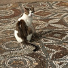 Cat on beautiful masaic floor at Ephesus.