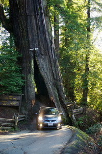 Drive through tree road Northern California ref : c60f2996-389c-4b5a-ae7d-d615d60cb958