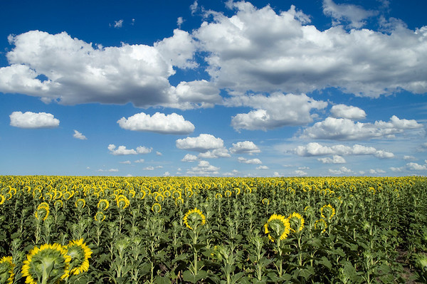 Near Montevideo in Uruguay I spotted this field next to the road on a drive from Beunos Aries, Argentina to Montevideo in Uruguay.  We pulled over and I jumped the farmers fence and snapped a couple of quick shots before driving on.