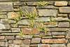 Irish wall
