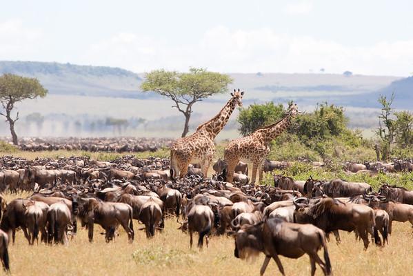 Tanzania, 2007