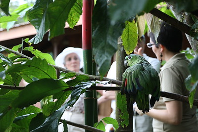 Costa Rica greeter, La Fortuna