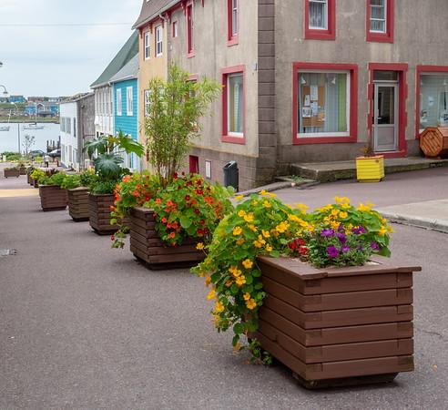 St_Pierre flowers