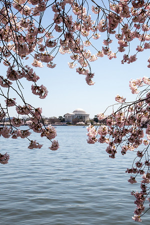 View through the blossoms