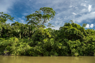 Belize River, Burrel Boom.