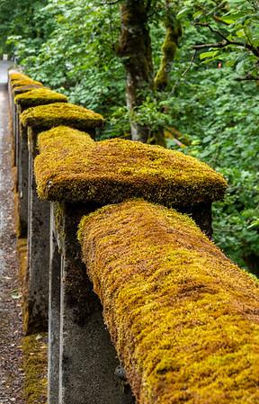 Moss covered bridge